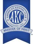 AKC breeder of merit papillon