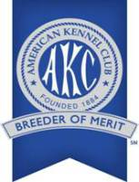 AKC breeder of merit papillon